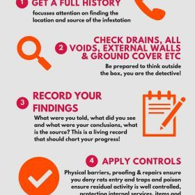 rat control advice infographic
