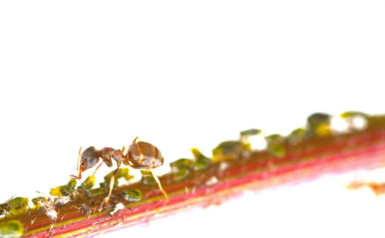 bristol ant control treatments for garden ants in the house and kitchen