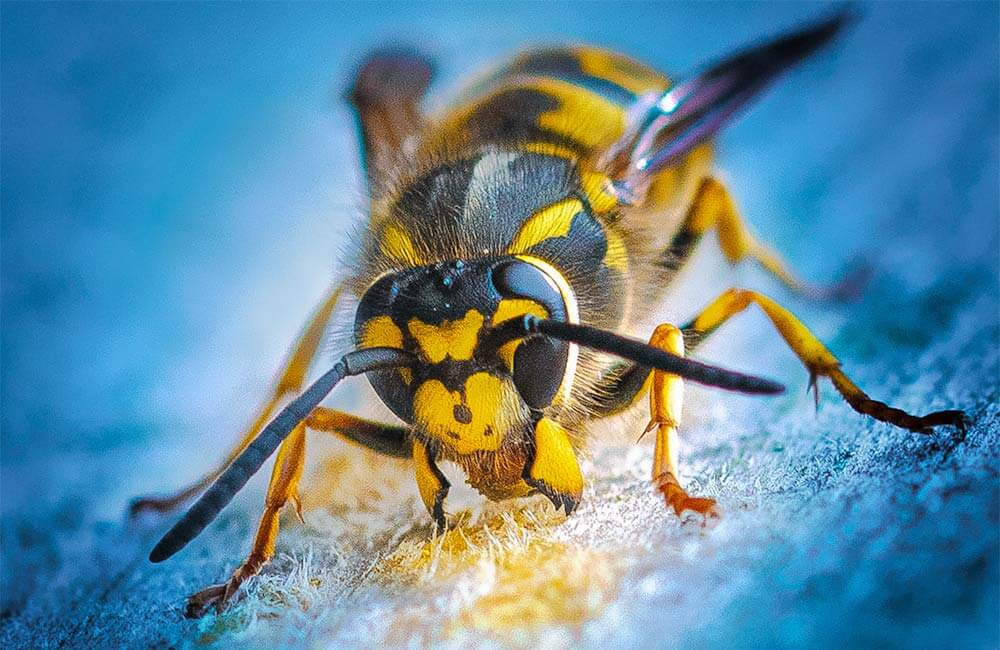 wasp pest bristol