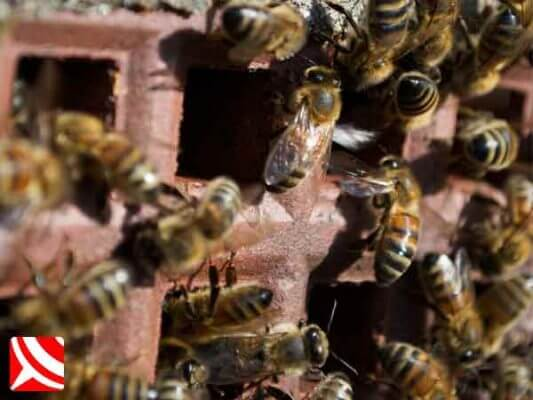 Honey bees in a chimney vent