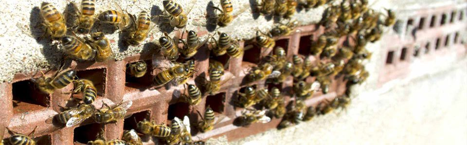 honey bees swarm chimney bristol