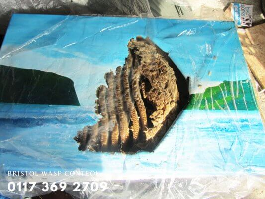 old wasps nest in painting
