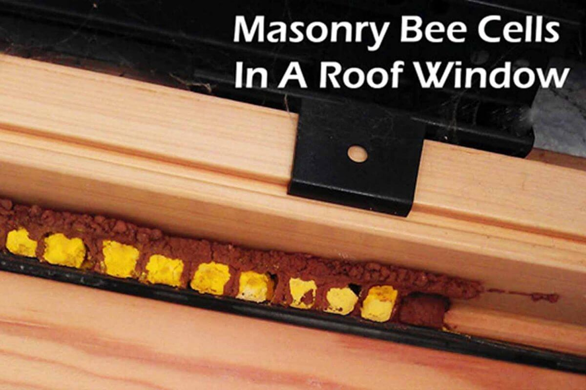 masonry bees roof window frame cells